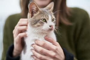Aplikasi MeowTalk Penerjemah Kucing